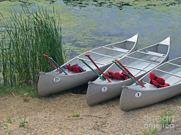 Livonia Photograph - Canoes To Go by Ann Horn