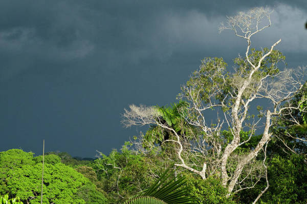 Canopy Photograph - Canopy Scenic, Yasuni National Park by Pete Oxford