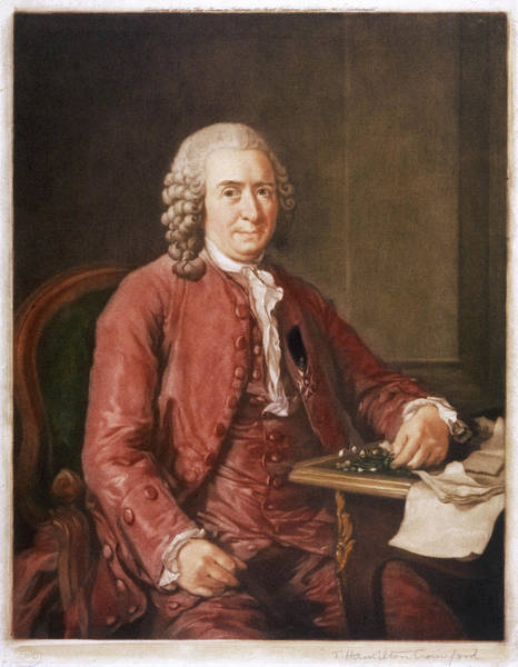 Wall Art - Drawing - Carl Von Linne Known As Linnaeus by Mary Evans Picture Library