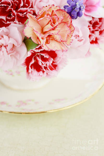 Cup Photograph - Carnations by Stephanie Frey