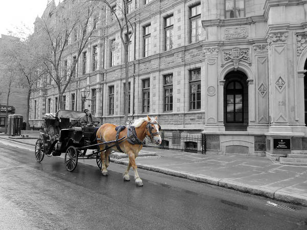 Photograph - Carriage Rides Series 05 by Carlos Diaz