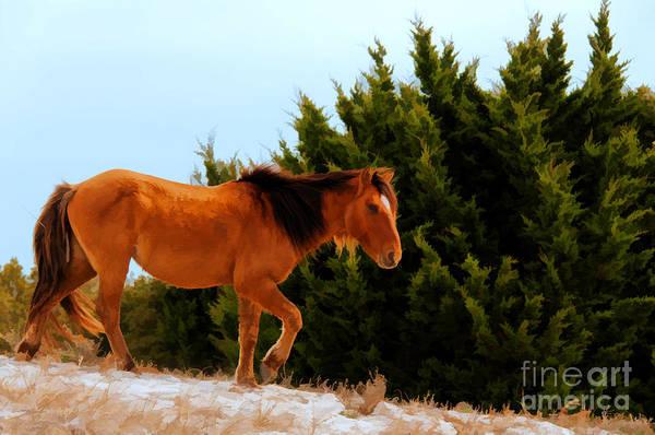 Carrot Island Pony Art Print