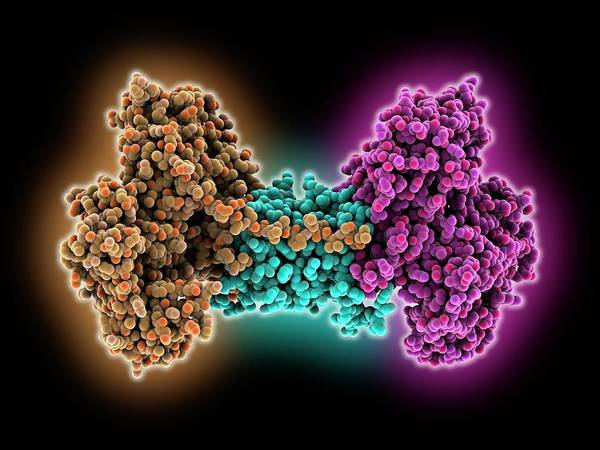 Wall Art - Photograph - Cas1-cas2 Nuclease Complex by Laguna Design/science Photo Library