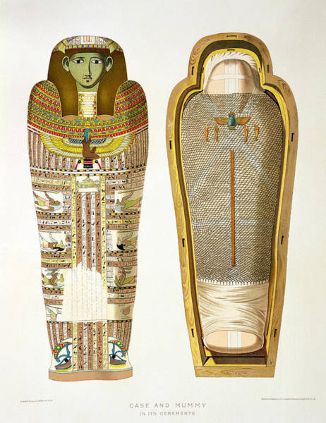Wall Art - Drawing - Case And Mummy In Its Cerements by American School