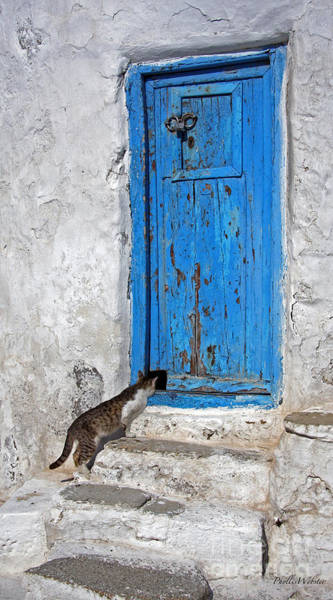 Man Of La Mancha Wall Art - Photograph - Cat And Mouse by Phyllis Webster
