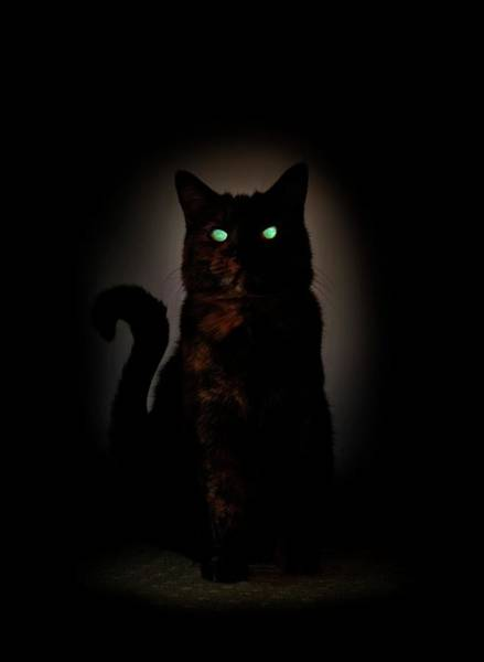 Felis Silvestris Photograph - Cat At Night With Eyeshine by Cordelia Molloy/science Photo Library