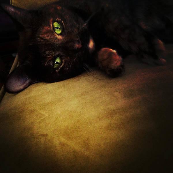 Photograph - Cat Eyes by Natasha Marco
