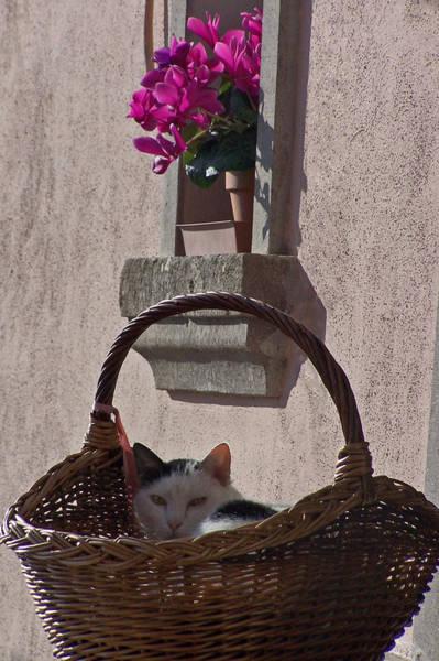 Photograph - Cat In Basket by Jennifer Robin
