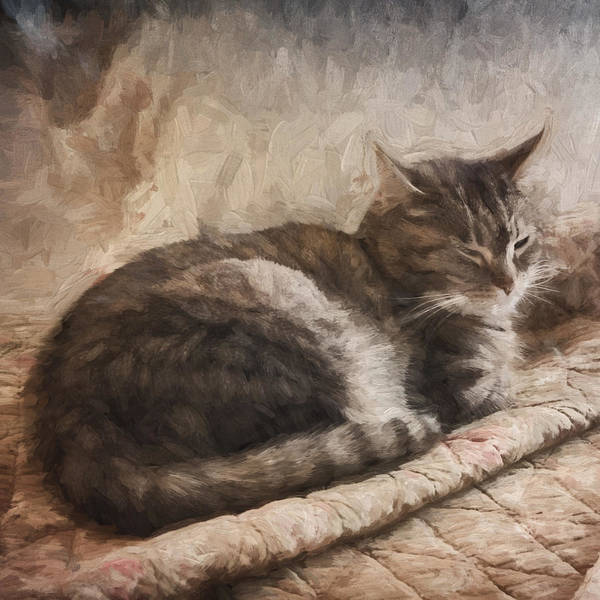 Sleep Mixed Media - Cat On The Bed Painterly by Carol Leigh
