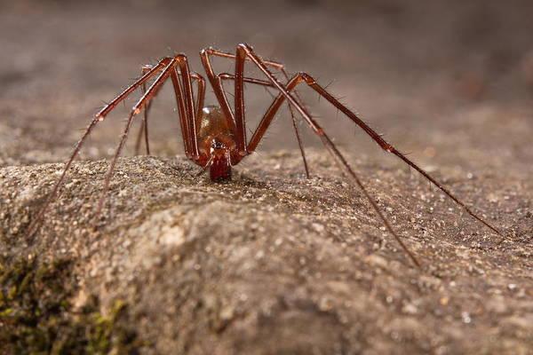 Photograph - Cave Spider by Francesco Tomasinelli