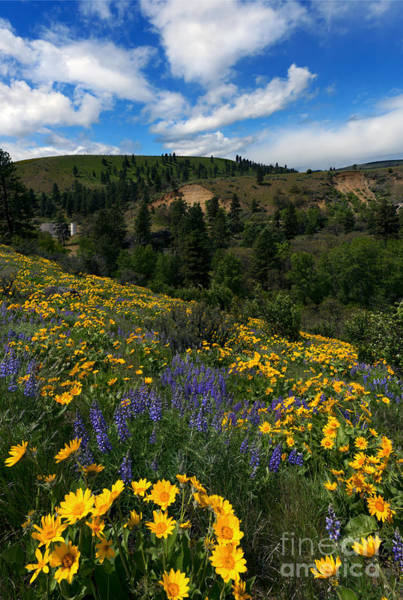 Wall Art - Photograph - Central Washington Spring by Mike Dawson