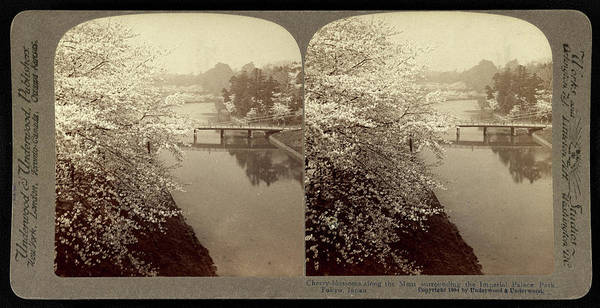 Wall Art - Drawing - Cherry-blossoms Along The Moat Surrounding The Imperial by Litz Collection