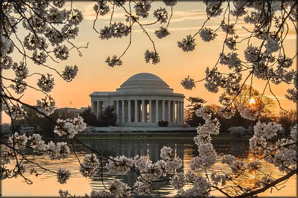 Photograph - Cherry Blossoms by Erika Fawcett