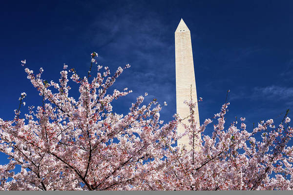 Wall Art - Photograph - Cherry Blossoms Under The Washington by Russ Bishop