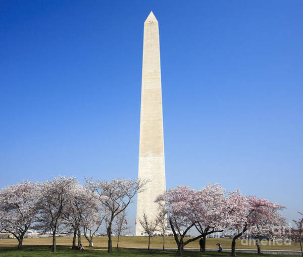 Digital Art - Cherry Trees And The Washington Monument by William Kuta