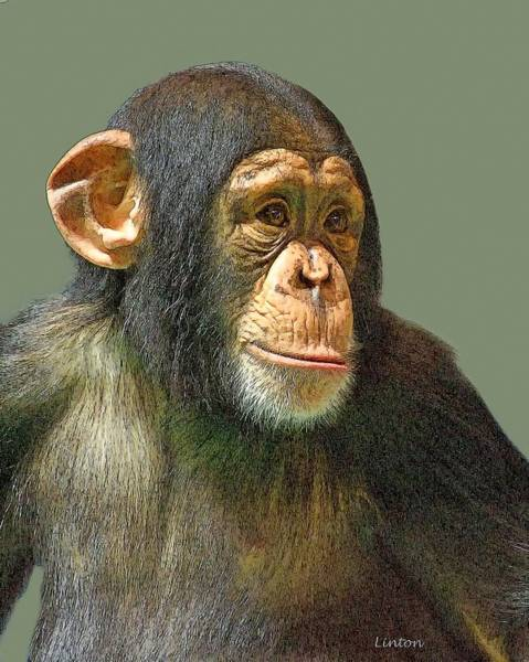 Digital Art - Chimp Portrait by Larry Linton