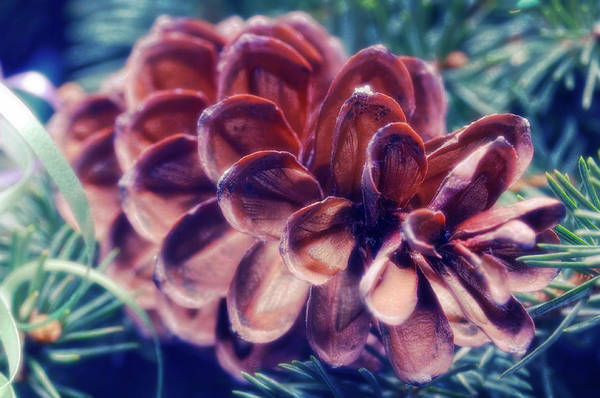 Pine Cones Photograph - Christmas Decorations by Maria Mosolova/science Photo Library