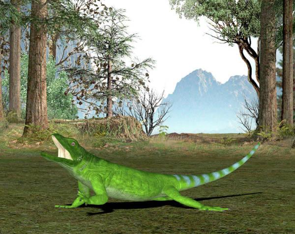 Chuckwalla Photograph - Chuckwalla Lizard by Friedrich Saurer
