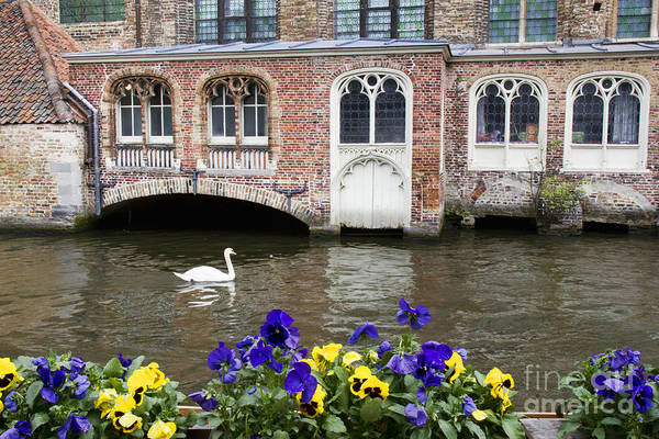 Photograph - Church And Swan 2 by Crystal Nederman