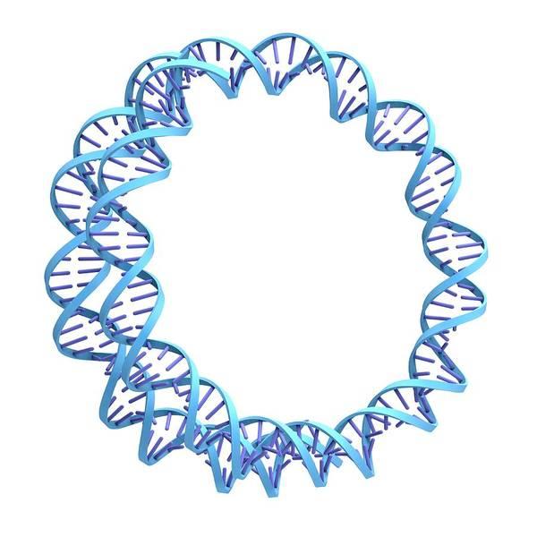 Genetic Information Wall Art - Photograph - Circular Dna Molecule by Alfred Pasieka
