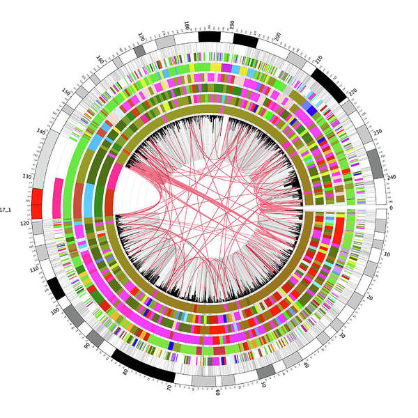 Genetic Information Wall Art - Photograph - Circular Genome Map by Martin Krzywinski/science Photo Library
