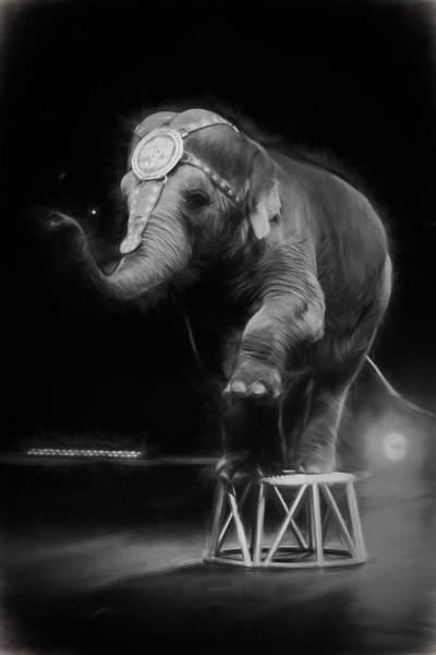 Photograph - Circus Elephant by Alice Gipson