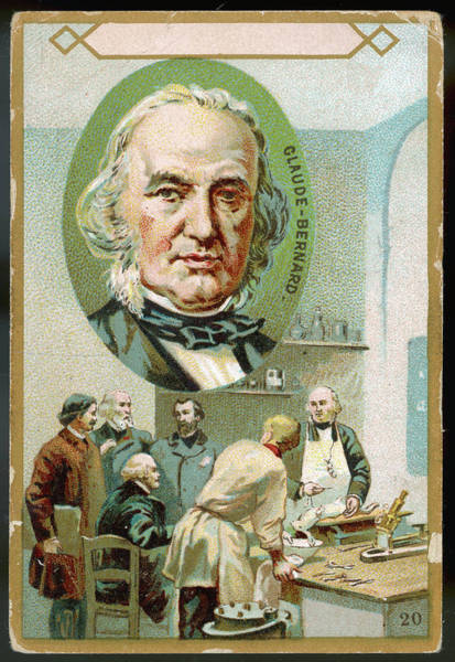 Wall Art - Drawing - Claude Bernard  French Physiologist Who by Mary Evans Picture Library