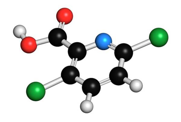 Thistle Photograph - Clopyralid Herbicide Molecule by Molekuul