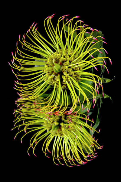 Wall Art - Photograph - Close Up Of A Unique Tropical Flower by Scott Mead