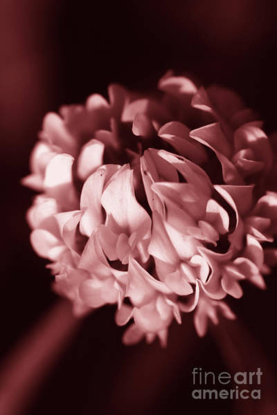 Brighter Side Photograph - Clover Flower by Jorgo Photography - Wall Art Gallery