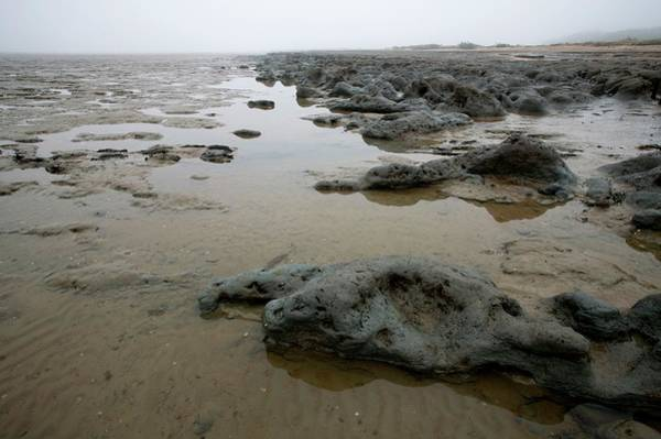 Foreshore Photograph - Coastal Boulder Clay by David Woodfall Images/science Photo Library