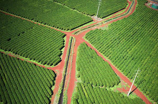 Wall Art - Photograph - Coffee Trees Grow On Kauai  Port Allen by Robert L. Potts