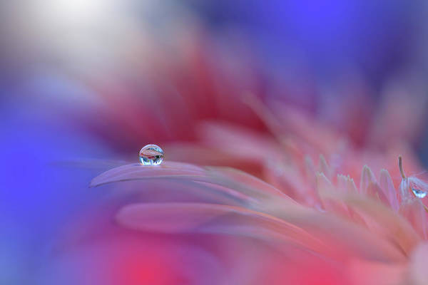 Wall Art - Photograph - Colorful Explosion... by Juliana Nan