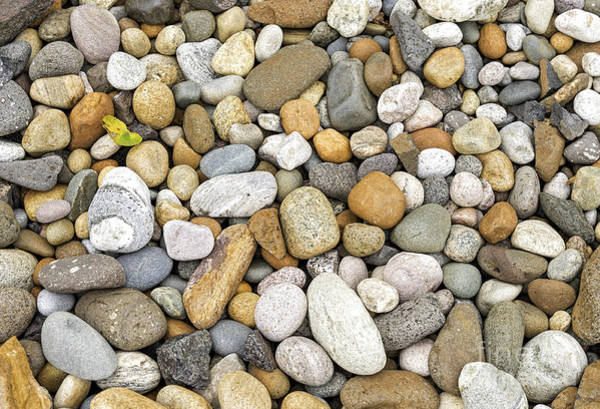 Photograph - Colorful Pebbles by Les Palenik