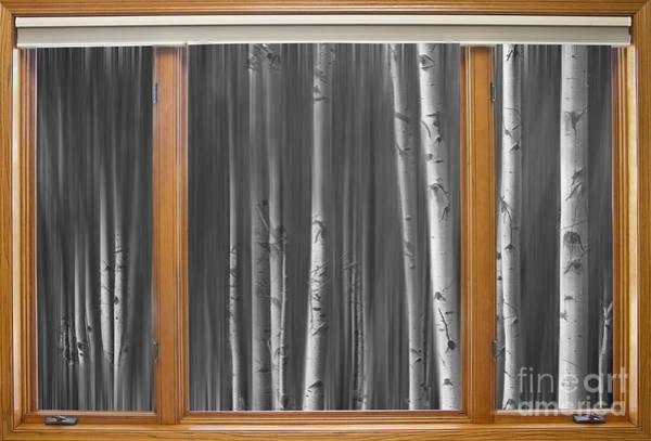 Photograph - Bw Surreal Forest Dream Classic Wood Window View  by James BO Insogna