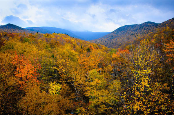Photograph - Colors Of Nature by Penny Lisowski