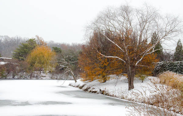 Photograph - Colors Of Winter by Julie Palencia