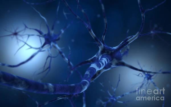 Wall Art - Digital Art - Conceptual Image Of Neuron by Stocktrek Images
