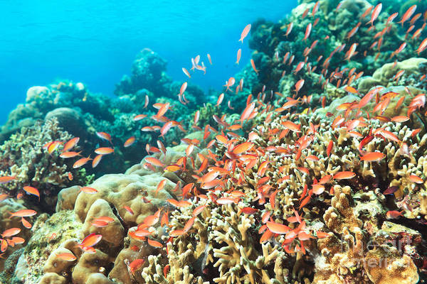 Wall Art - Photograph - Coral Reef by MotHaiBaPhoto Prints