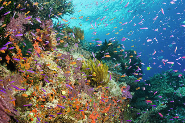 Feather Stars Photograph - Coral Reef With Shoals Of Tropical Fish by Pete Atkinson