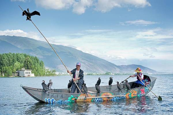 Cormorant Wall Art - Photograph - Cormorant Fishing In China by Tony Camacho
