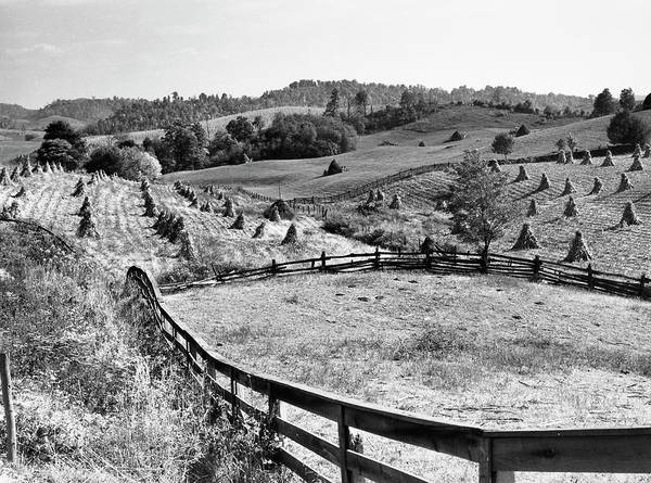 Wall Art - Photograph - Corn Field, 1940 by Granger