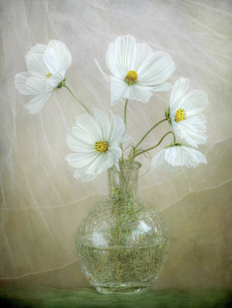 Wall Art - Photograph - Cosmos Breeze by Mandy Disher