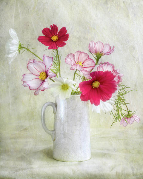 Jug Wall Art - Photograph - Cosmos Carnival by Mandy Disher