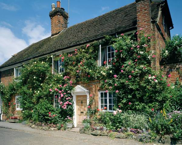 Climbing Plants Photograph - Cottage by Andy Williams/science Photo Library