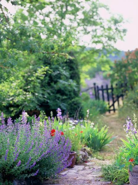 Nasturtiums Wall Art - Photograph - Cottage Garden by Rachel Warne/science Photo Library