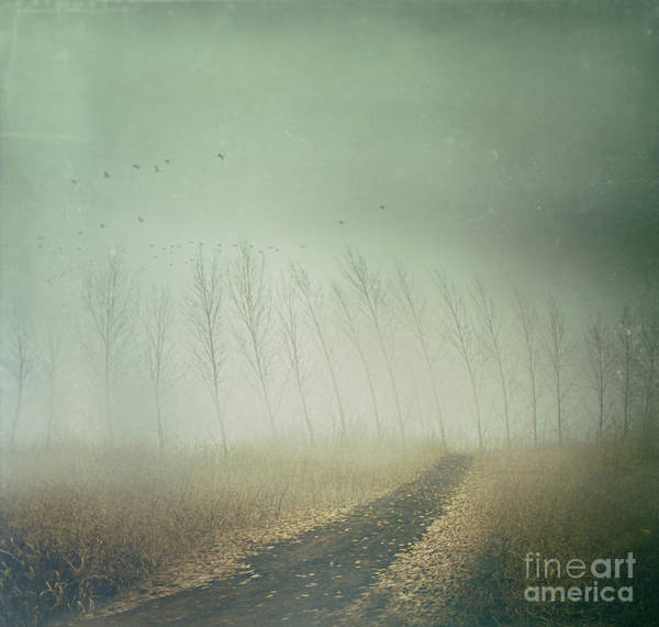 Photograph - Country Path In Autumn Fields by Sandra Cunningham