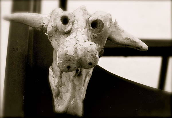 Photograph - Cow Head by Kim Pippinger