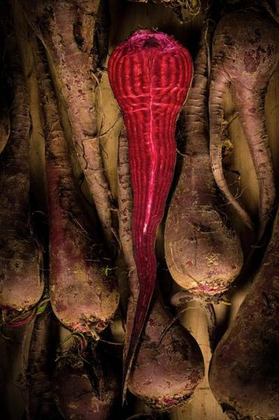 Beetroot Wall Art - Photograph - Crapaudine Beetroot by Aberration Films Ltd