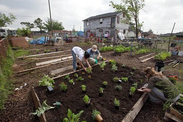 Katrina Wall Art - Photograph - Creating Community Garden by Jim West